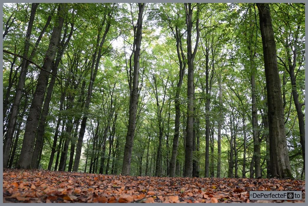 bomen_bij_hooge_vuursche_0010 (Kopie)